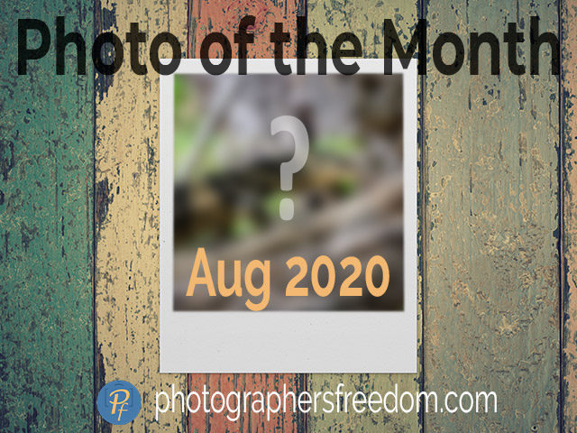 photo-of-the-month-aug-2020-photographers-freedom-featured-image